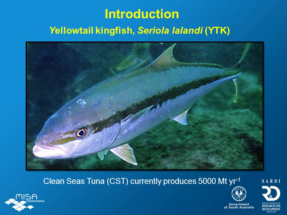 Yellowtail kingfish, Seriola lalandi (YTK) Introduction Clean Seas Tuna (CST) currently produces 5000 Mt yr -1