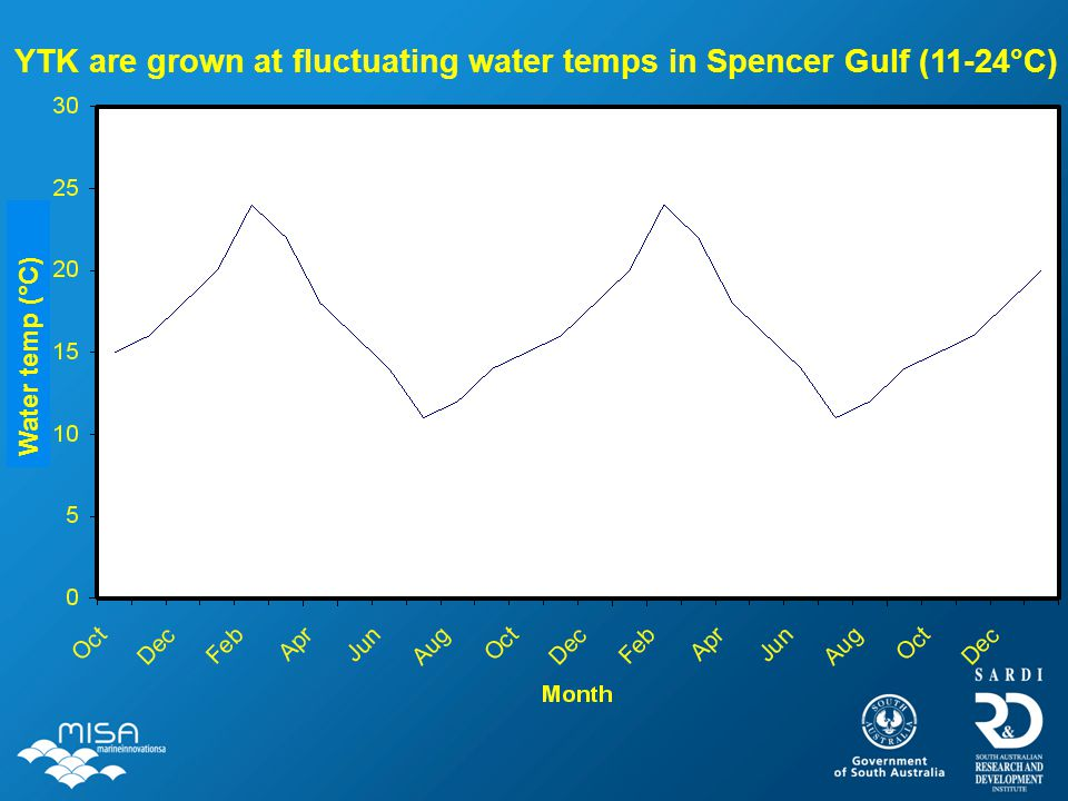 YTK are grown at fluctuating water temps in Spencer Gulf (11-24°C) Water temp (°C)