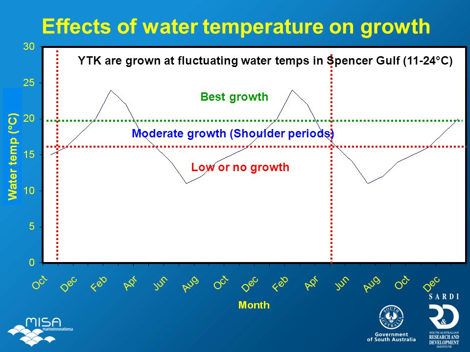 Effects of water temperature on growth Best growth Moderate growth (Shoulder periods) Low or no growth YTK are grown at fluctuating water temps in Spe