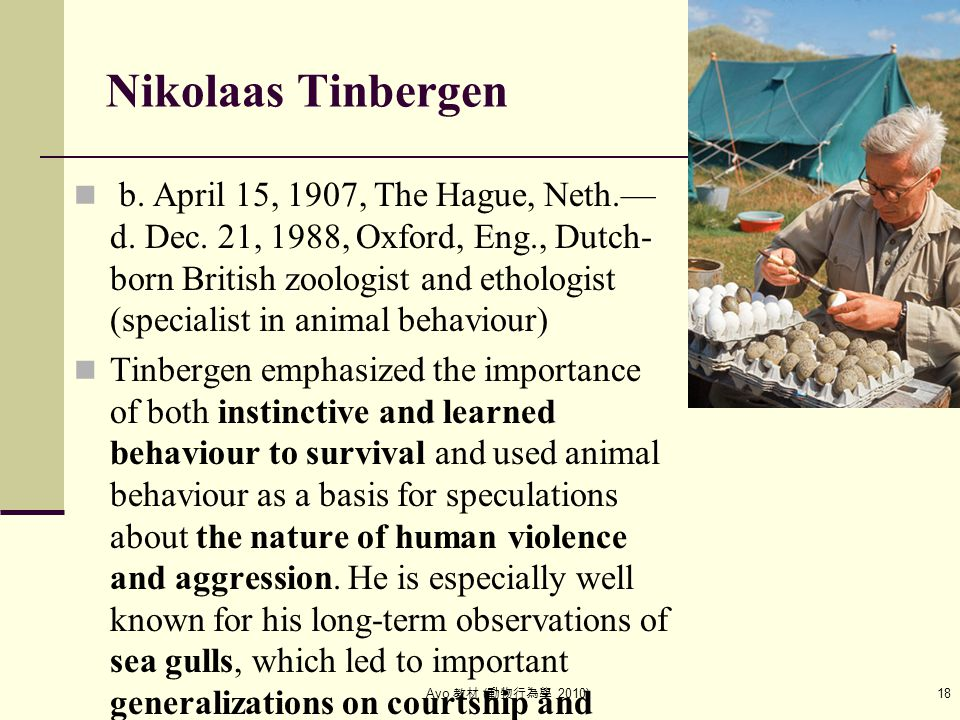 Ayo 教材 ( 動物行為學 2010) 18 Nikolaas Tinbergen b. April 15, 1907, The Hague, Neth.— d. Dec. 21, 1988, Oxford, Eng., Dutch- born British zoologist and etho