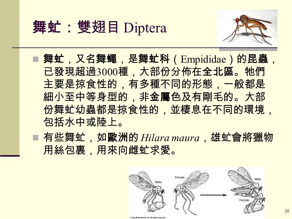 Ayo 教材 ( 動物行為學 2010) 20 舞虻:雙翅目 Diptera 舞虻,又名舞蠅,是舞虻科( Empididae )的昆蟲, 已發現超過 3000 種,大部份分佈在全北區。牠們 主要是掠食性的,有多種不同的形態,一般都是 細小至中等身型的,非金屬色及有剛毛的。大部 份舞虻幼蟲都是掠食性的,並棲息在不同的環境, 包括水中或陸上。 有些舞虻,如歐洲的 Hilara maura ,雄虻會將獵物 用絲包裹,用來向雌虻求愛。