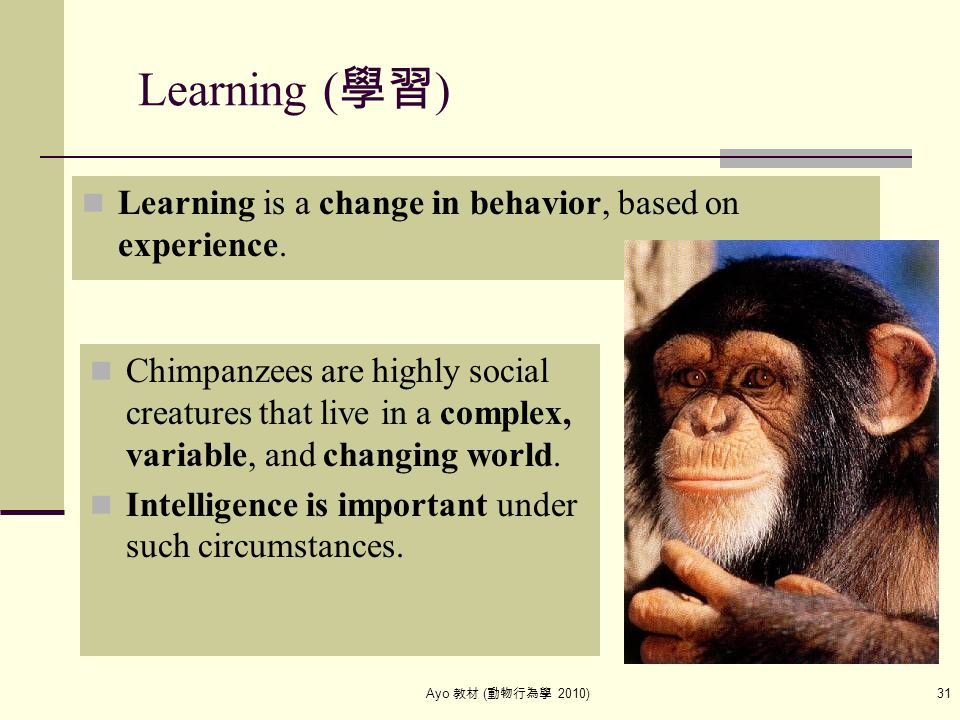 Ayo 教材 ( 動物行為學 2010) 31 Learning ( 學習 ) Learning is a change in behavior, based on experience. Chimpanzees are highly social creatures that live in a