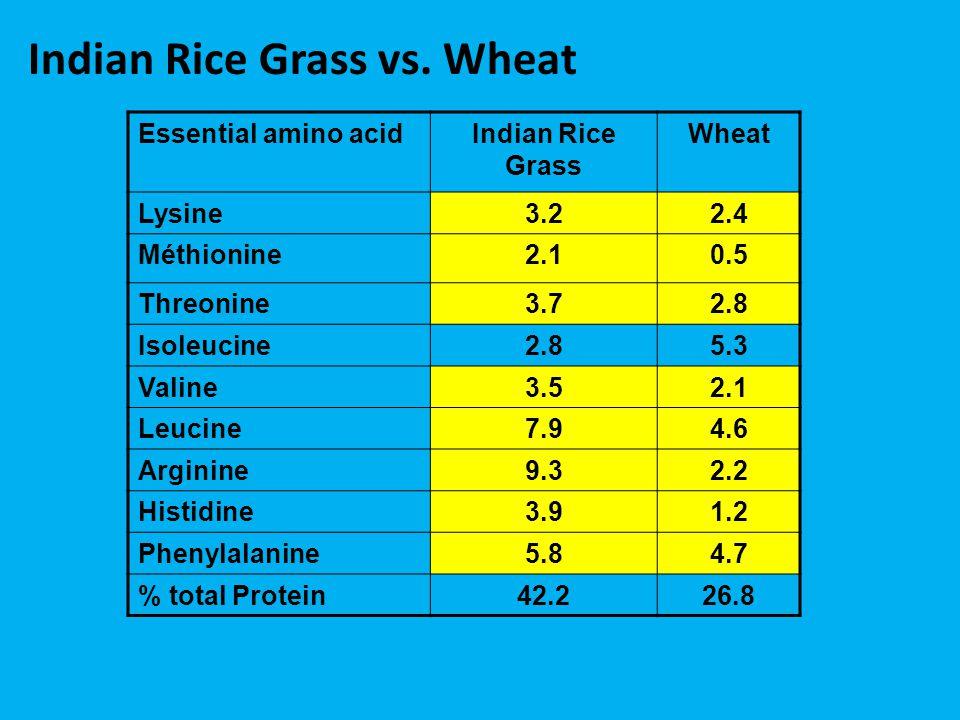 Essential amino acidIndian Rice Grass Wheat Lysine3.22.4 Méthionine2.10.5 Threonine3.72.8 Isoleucine2.85.3 Valine3.52.1 Leucine7.94.6 Arginine9.32.2 Histidine3.91.2 Phenylalanine5.84.7 % total Protein42.226.8 Indian Rice Grass vs.