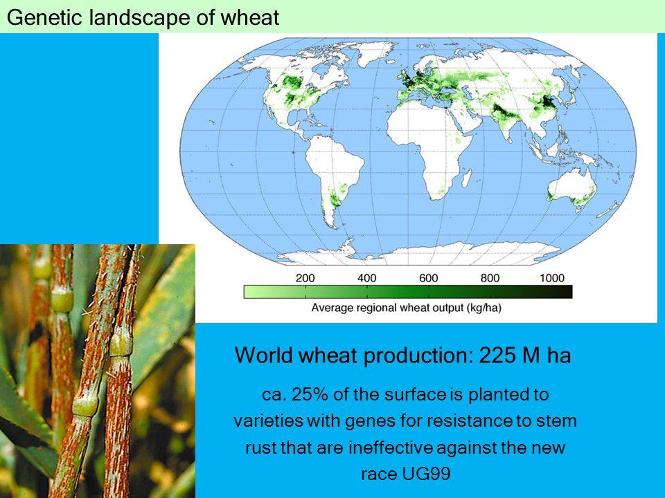 World wheat production: 225 M ha ca.