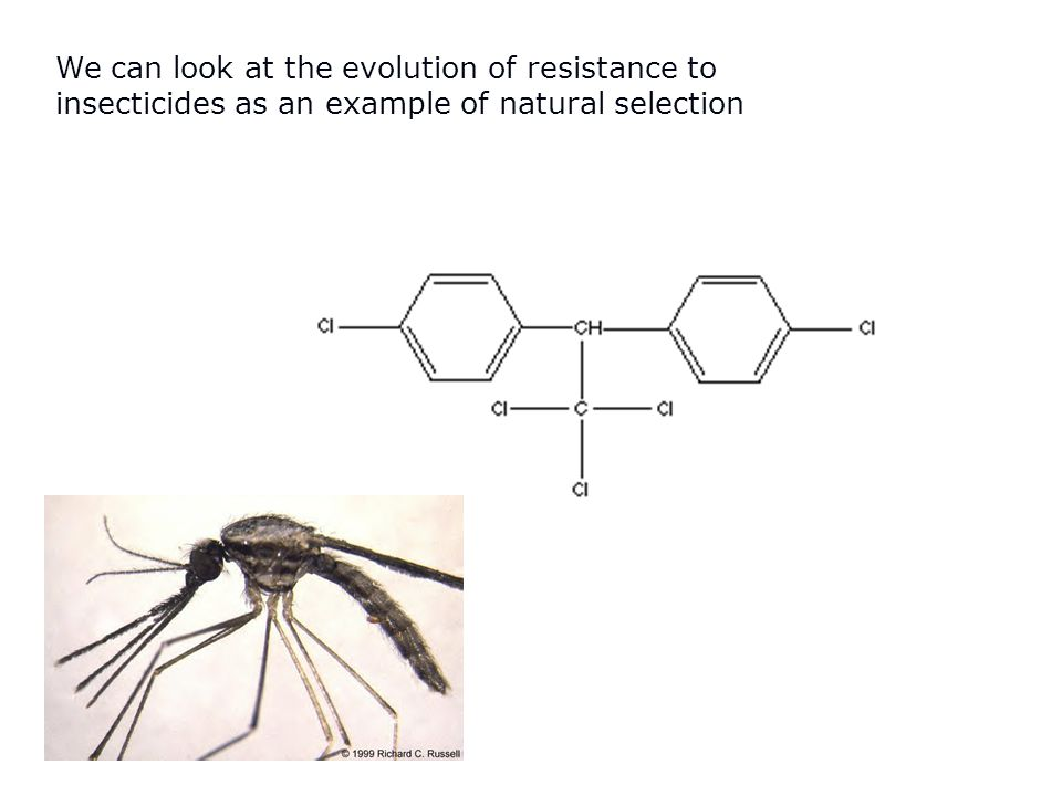 We can look at the evolution of resistance to insecticides as an example of natural selection