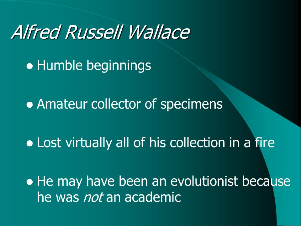 Alfred Russell Wallace Humble beginnings Amateur collector of specimens Lost virtually all of his collection in a fire He may have been an evolutionist because he was not an academic