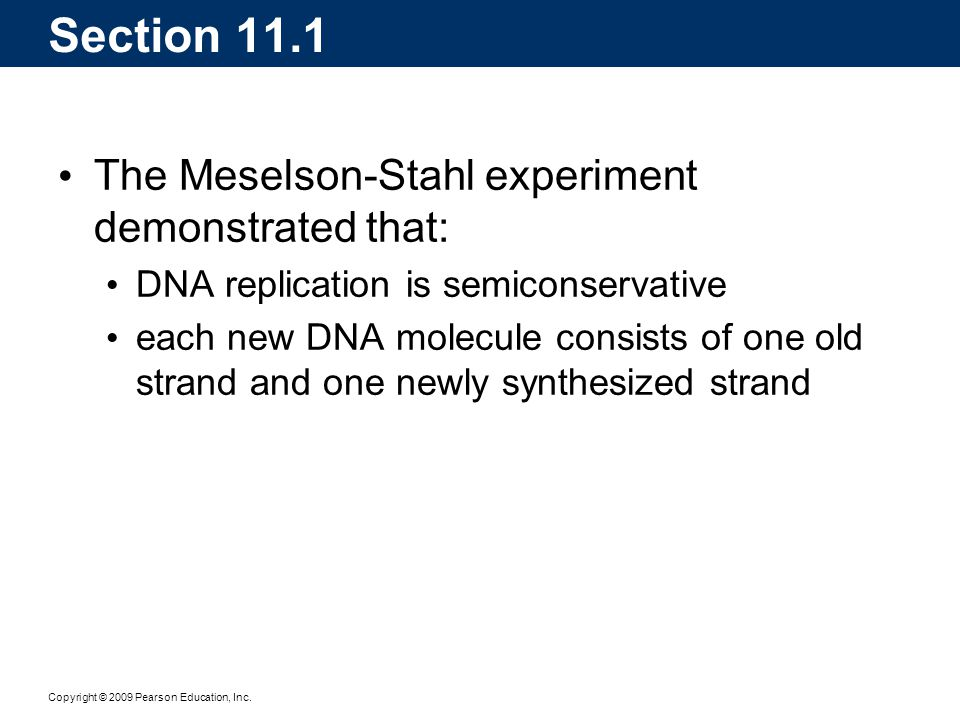Copyright © 2009 Pearson Education, Inc. DNA synthesis at a single replication fork: Section 11.4