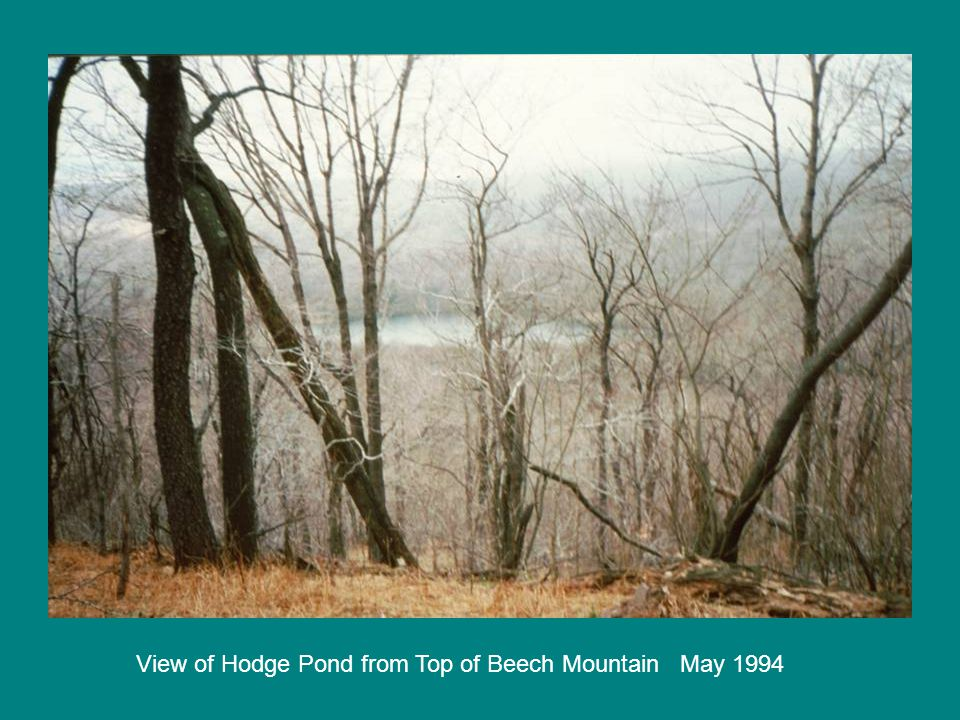 View of Hodge Pond from Top of Beech Mountain May 1994