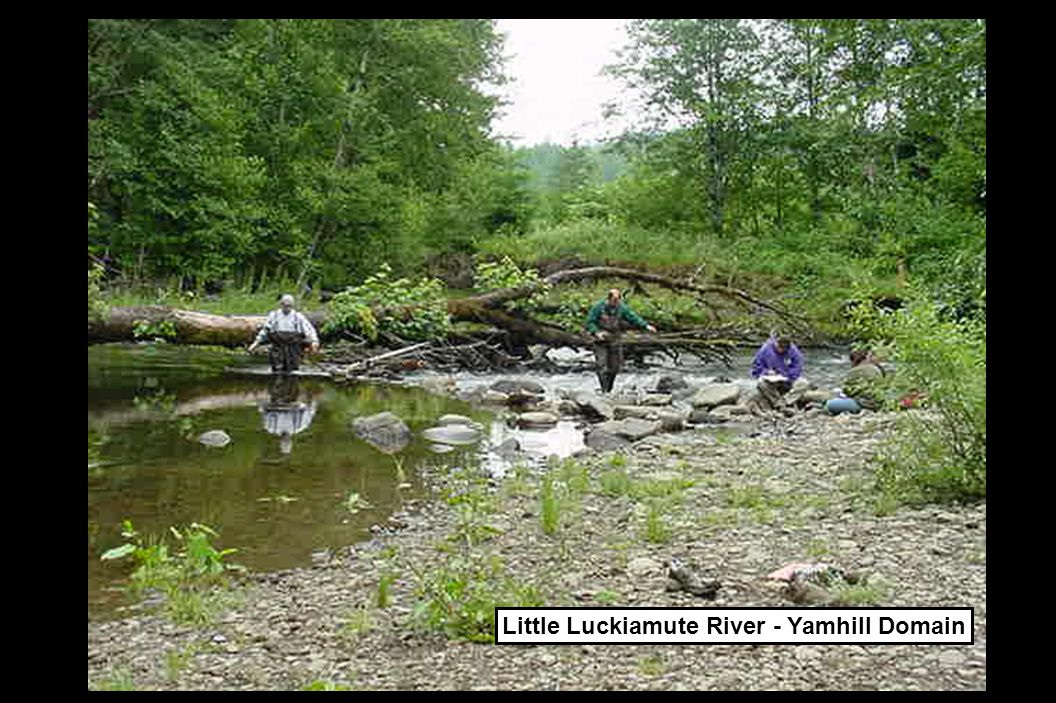 Little Luckiamute River - Yamhill Domain