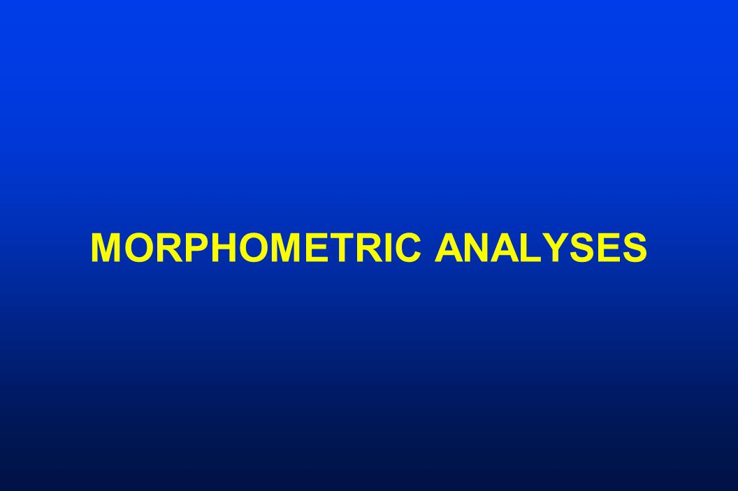 MORPHOMETRIC ANALYSES
