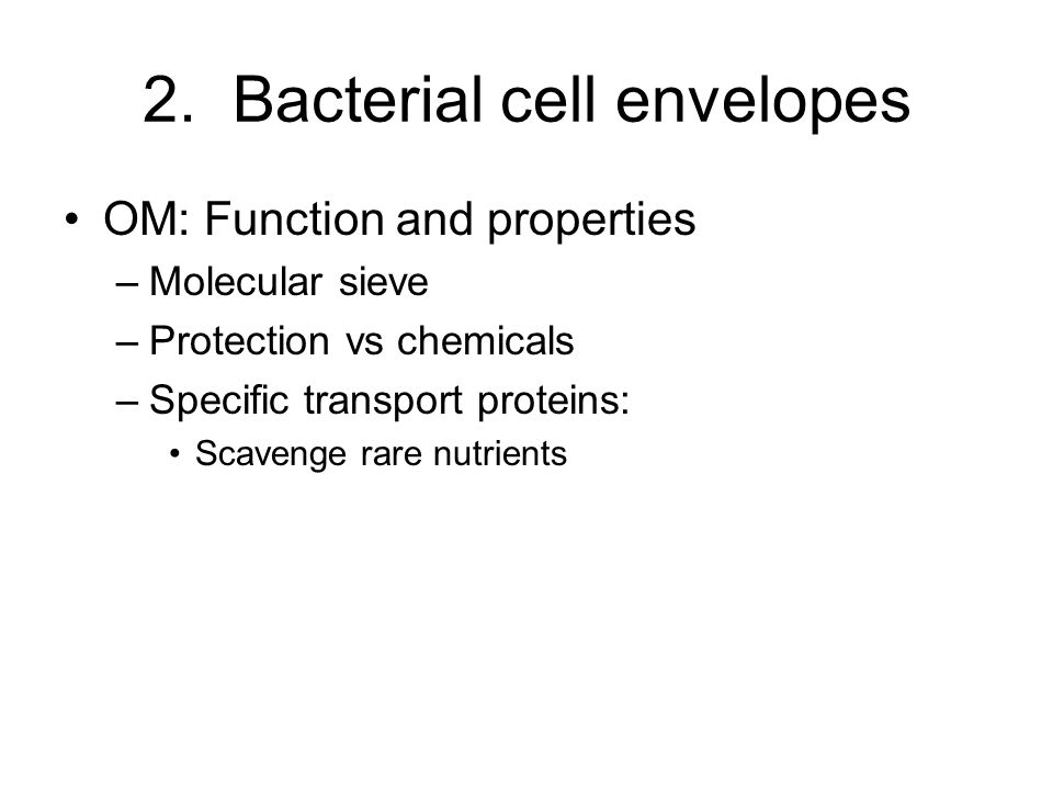 2. Bacterial cell envelopes OM: Function and properties –Molecular sieve –Protection vs chemicals –Specific transport proteins: Scavenge rare nutrient