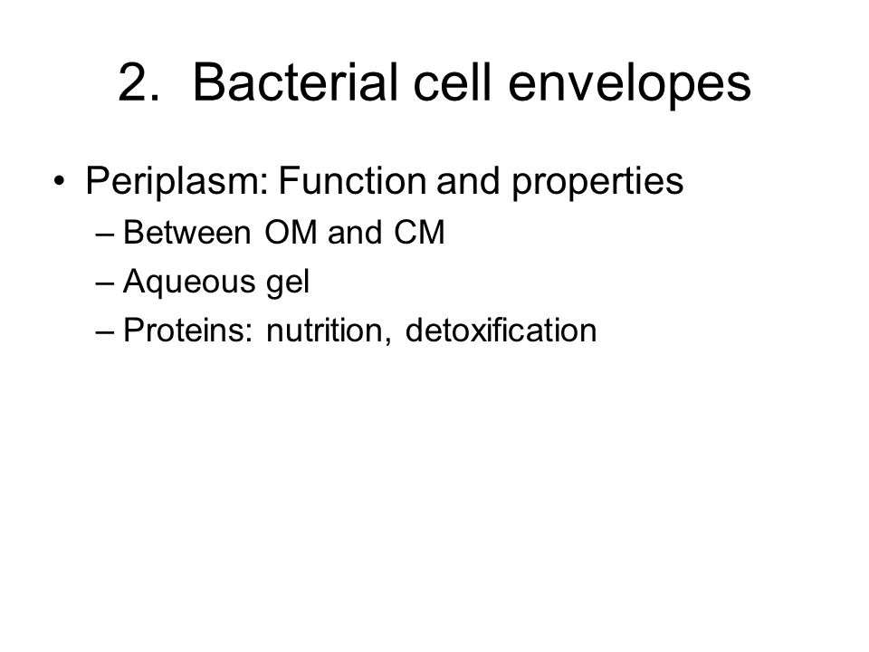 2. Bacterial cell envelopes Periplasm: Function and properties –Between OM and CM –Aqueous gel –Proteins: nutrition, detoxification