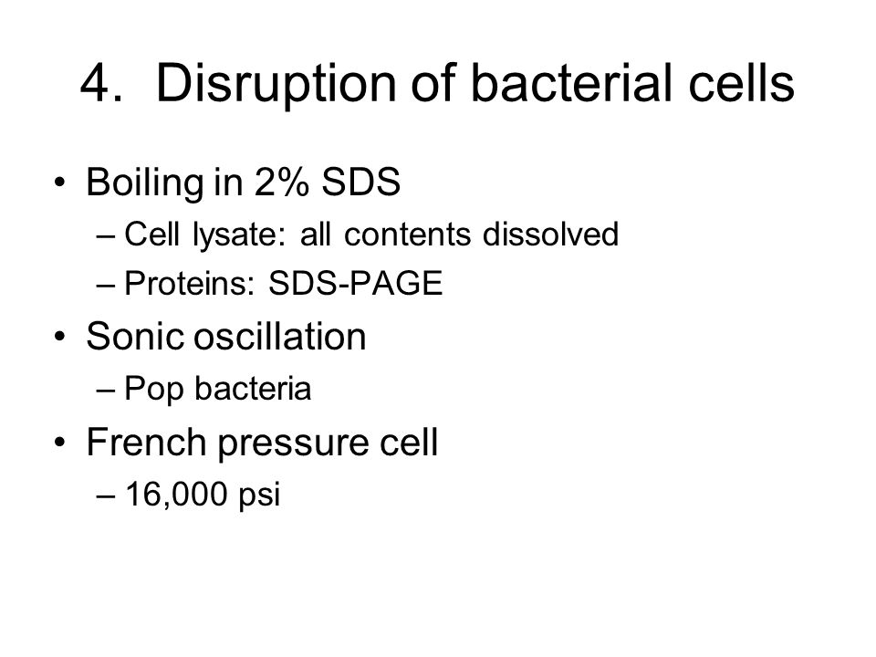 4. Disruption of bacterial cells Boiling in 2% SDS –Cell lysate: all contents dissolved –Proteins: SDS-PAGE Sonic oscillation –Pop bacteria French pre