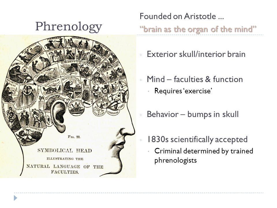 Phrenology Founded on Aristotle...