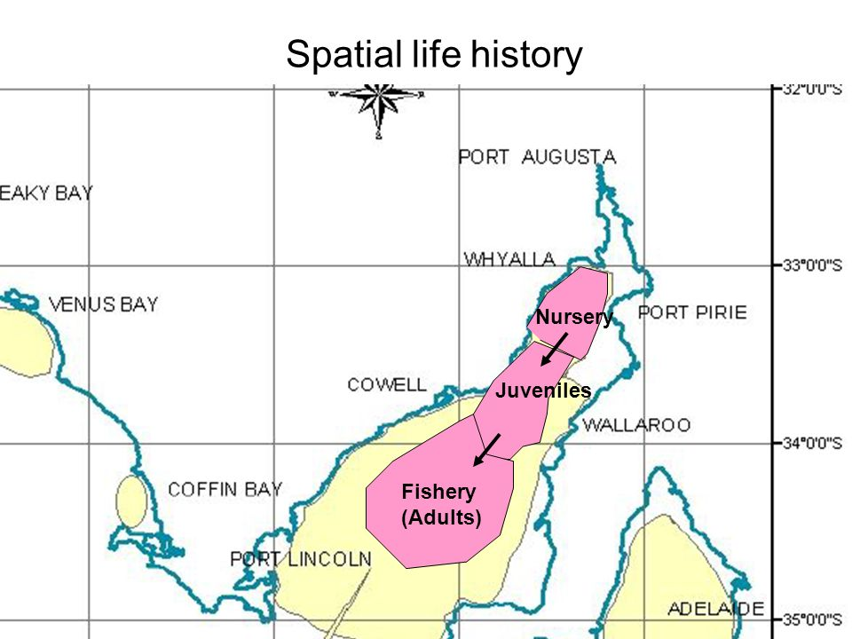 Spatial life history Nursery Juveniles Fishery (Adults)