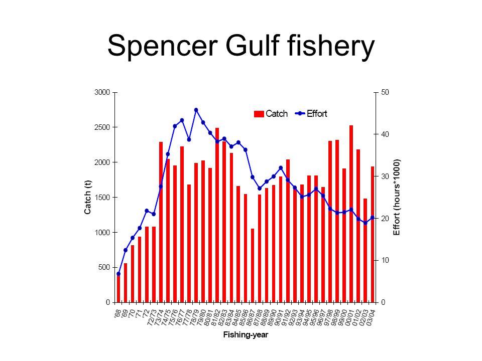 Spencer Gulf fishery