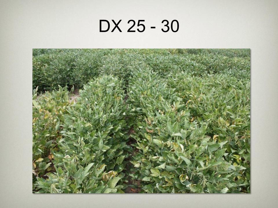 DX 25 - 30