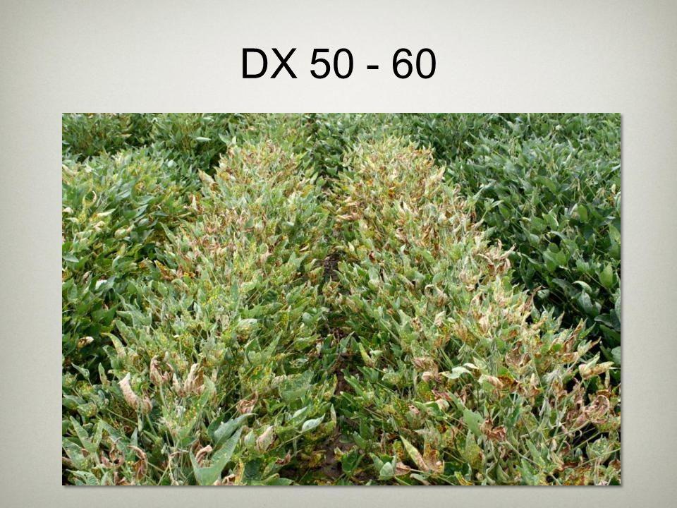 DX 50 - 60
