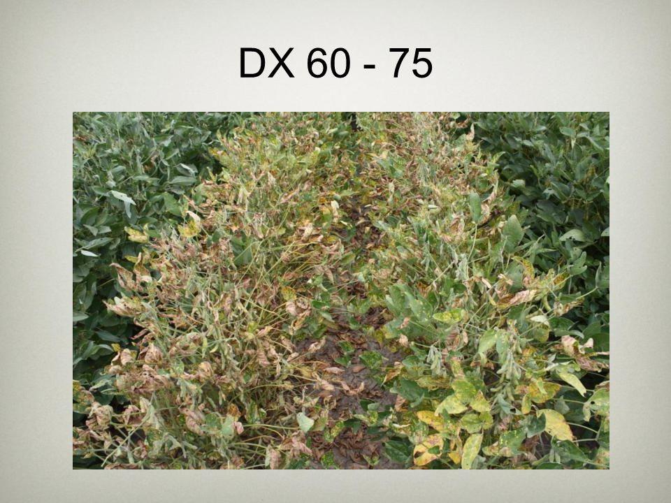 DX 60 - 75