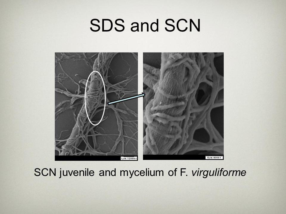 SCN juvenile and mycelium of F. virguliforme