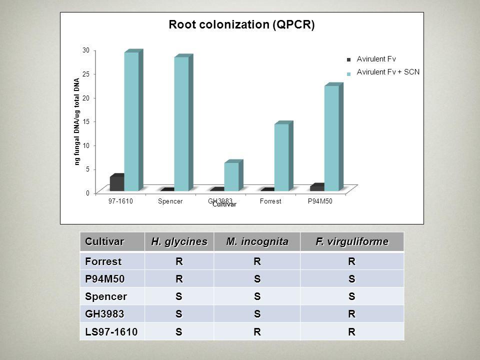 Cultivar H. glycines M. incognita F. virguliforme ForrestRRR P94M50RSS SpencerSSS GH3983SSR LS97-1610SRR Avirulent Fv Avirulent Fv + SCN