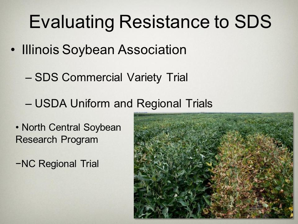 Evaluating Resistance to SDS Illinois Soybean Association –SDS Commercial Variety Trial –USDA Uniform and Regional Trials North Central Soybean Resear