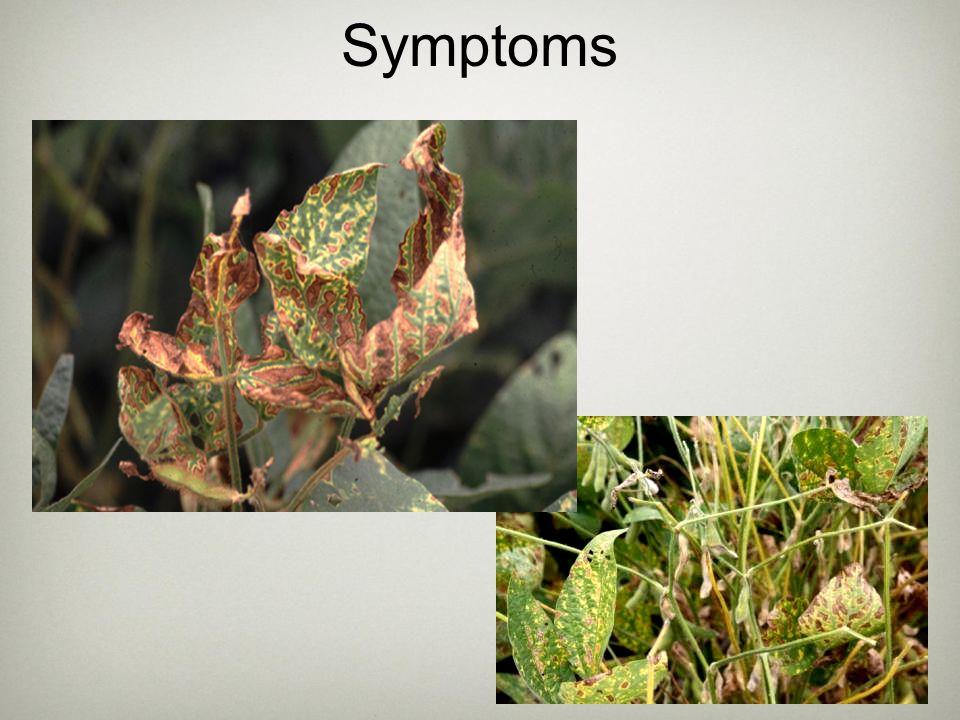 Similar Foliar Symptoms Stem Canker Phytophthora stem rot