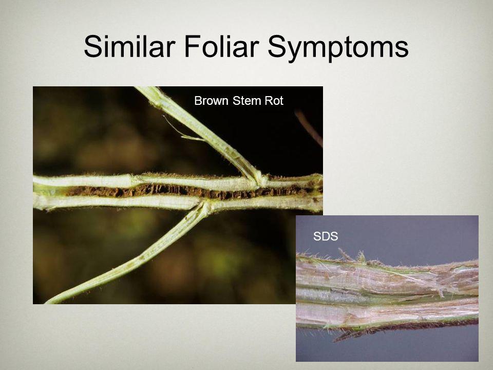 Similar Foliar Symptoms Brown Stem Rot SDS