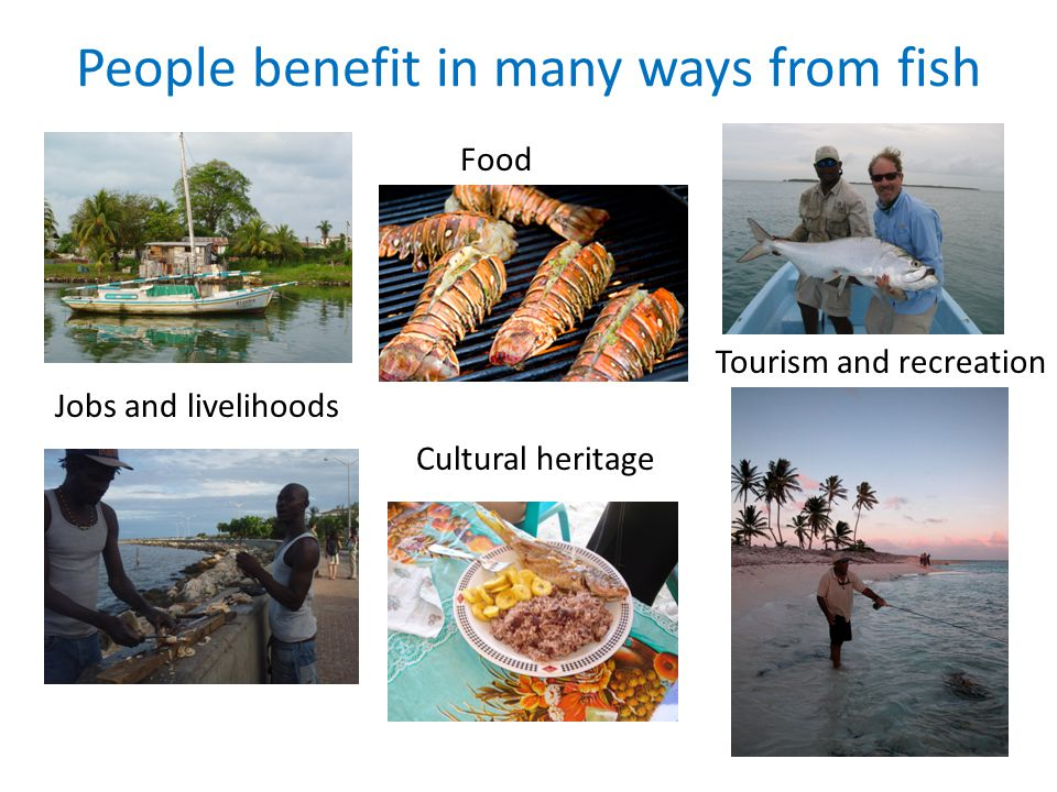 Food People benefit in many ways from fish Tourism and recreation Jobs and livelihoods Cultural heritage