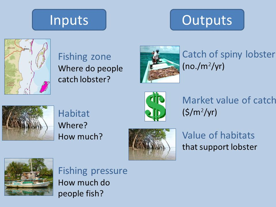 InputsOutputs Fishing zone Where do people catch lobster.