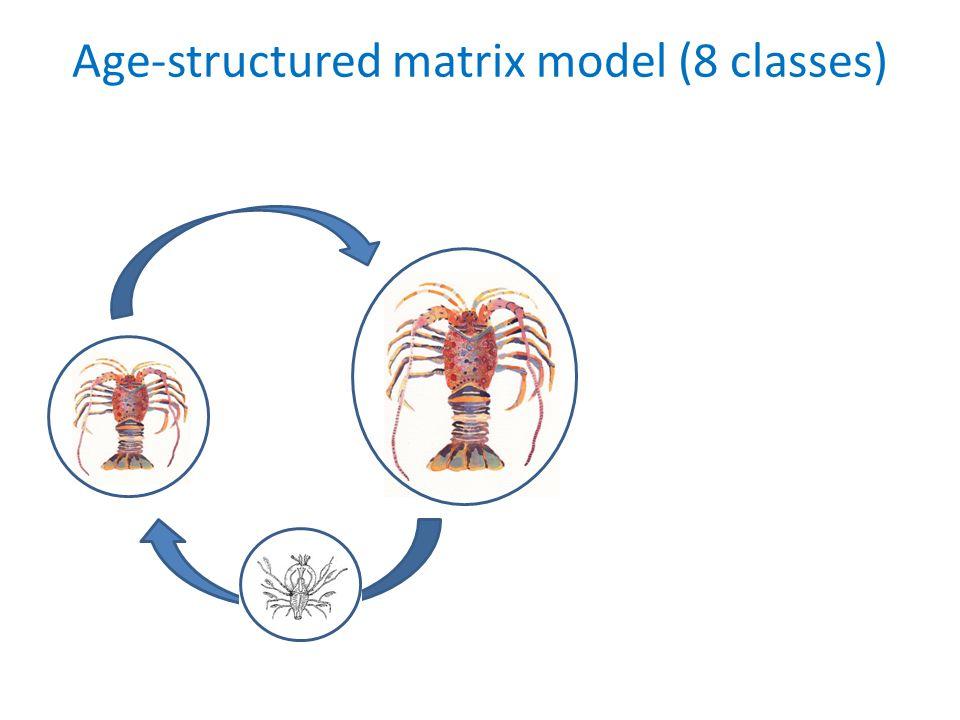 Age-structured matrix model (8 classes)