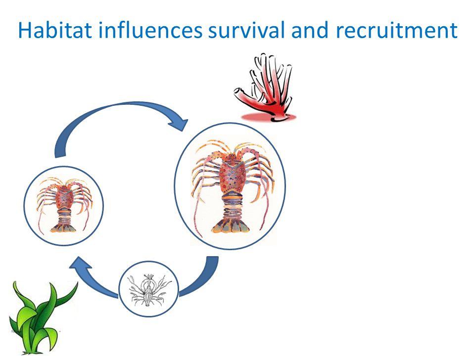 Loss of habitats decreases catch Current habitat50% reduction in habitat per planning region