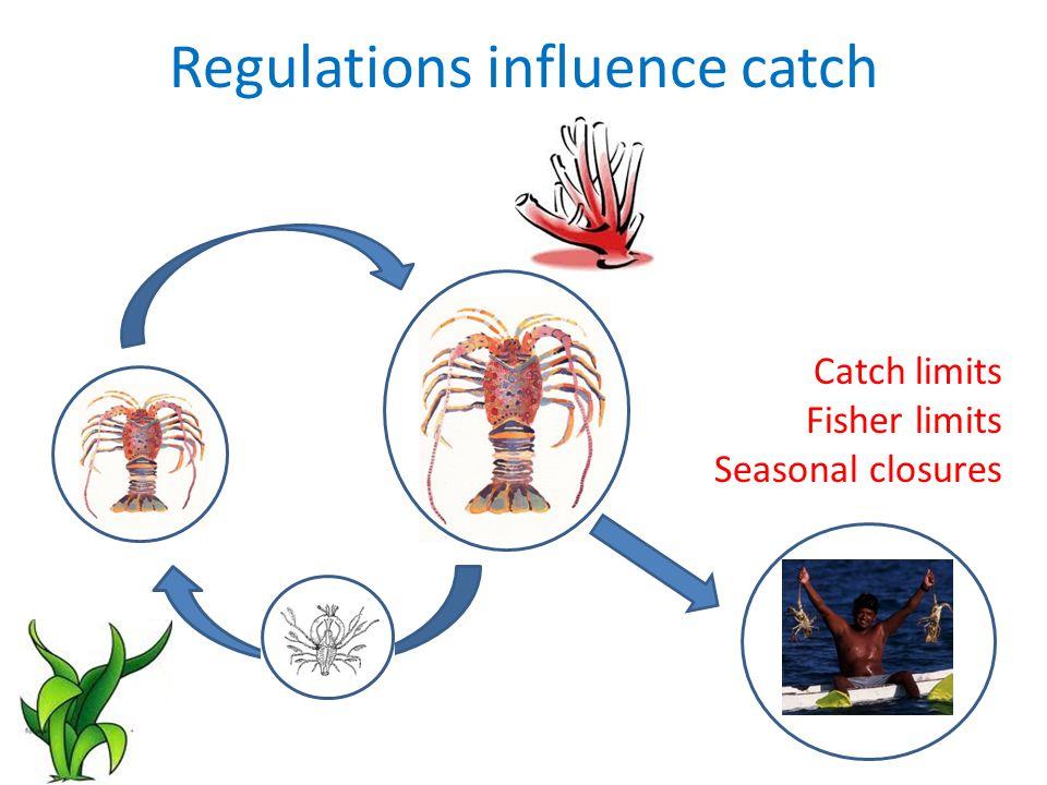 Questions How should we divide up lobster population.