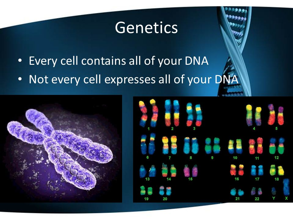 Genetics Every cell contains all of your DNA Not every cell expresses all of your DNA