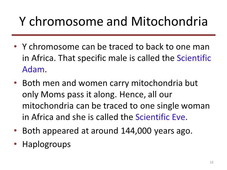 Y chromosome and Mitochondria Y chromosome can be traced to back to one man in Africa.