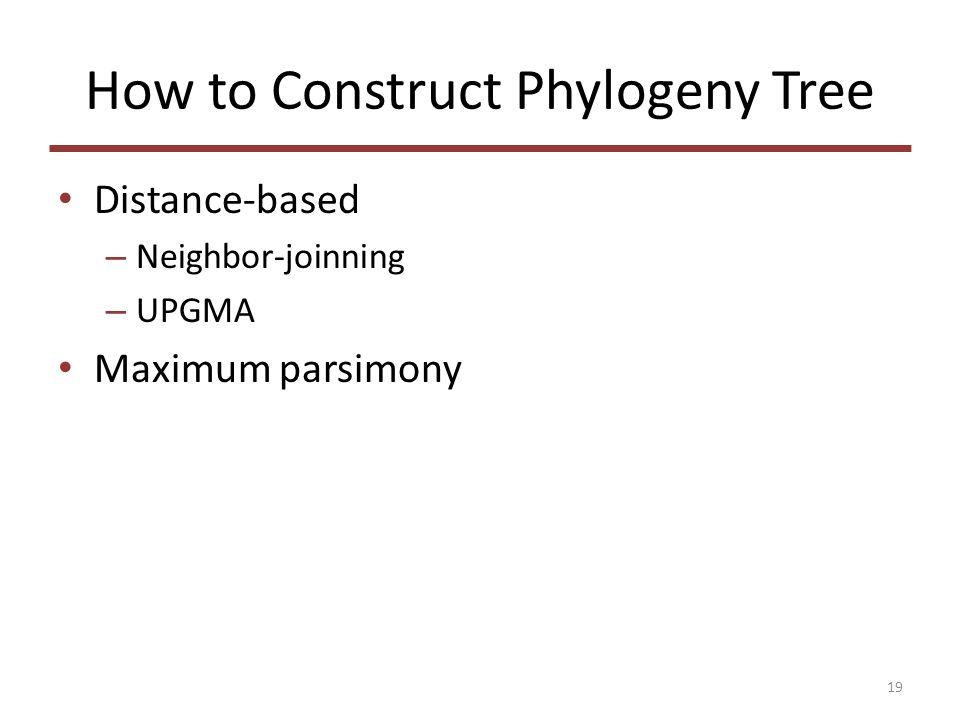 How to Construct Phylogeny Tree Distance-based – Neighbor-joinning – UPGMA Maximum parsimony 19