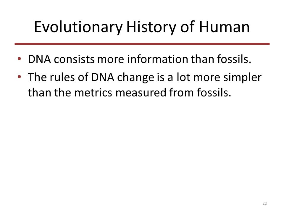 Evolutionary History of Human DNA consists more information than fossils.