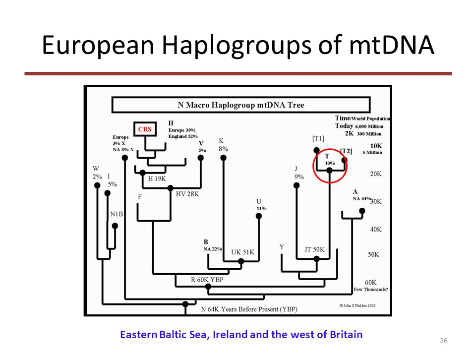 European Haplogroups of mtDNA 26 Eastern Baltic Sea, Ireland and the west of Britain