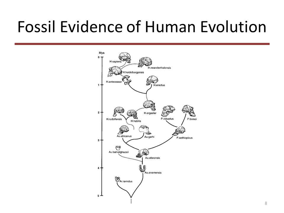 How to Construct Phylogeny Tree Distance-based – Neighbor-joinning – UPGMA Maximum parsimony 19