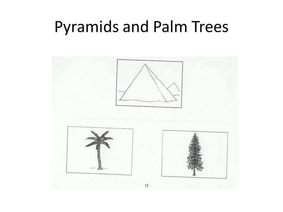Pyramids and Palm Trees