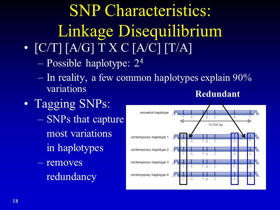 18 SNP Characteristics: Linkage Disequilibrium [C/T] [A/G] T X C [A/C] [T/A] –Possible haplotype: 2 4 –In reality, a few common haplotypes explain 90% variations Tagging SNPs: –SNPs that capture most variations in haplotypes –removes redundancy Redundant