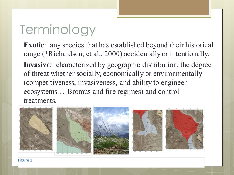 Literature Abella SR [et al.] Relationship of native desert plants with red brome (Bromus rubens): twoard indentifying invasion-reducing species [Journal].