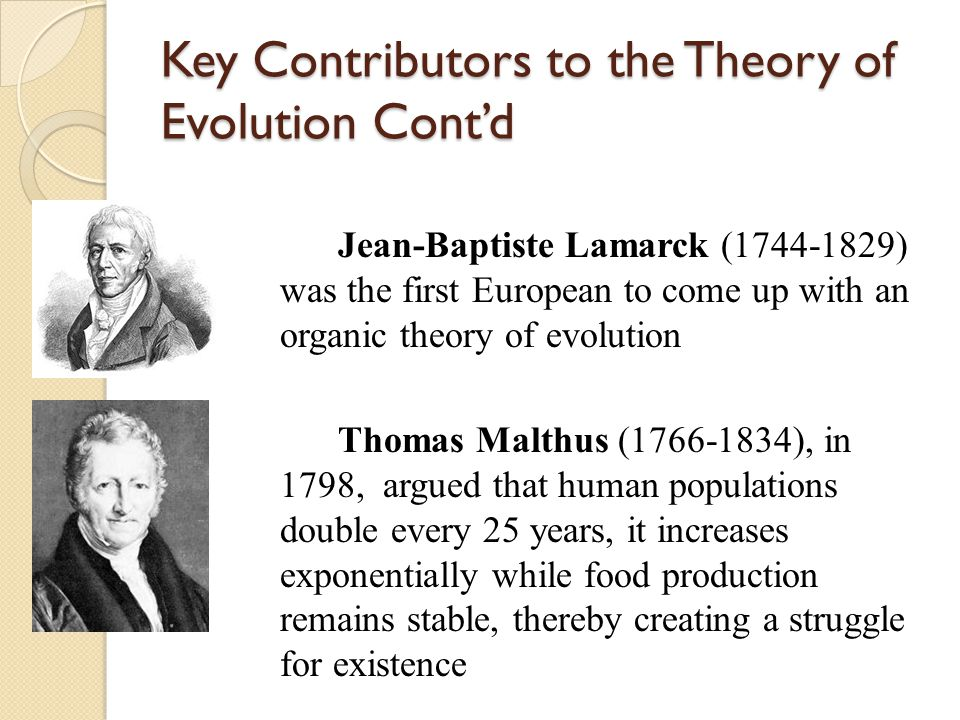 Key Contributors to the Theory of Evolution Cont'd Jean-Baptiste Lamarck (1744-1829) was the first European to come up with an organic theory of evolution Thomas Malthus (1766-1834), in 1798, argued that human populations double every 25 years, it increases exponentially while food production remains stable, thereby creating a struggle for existence
