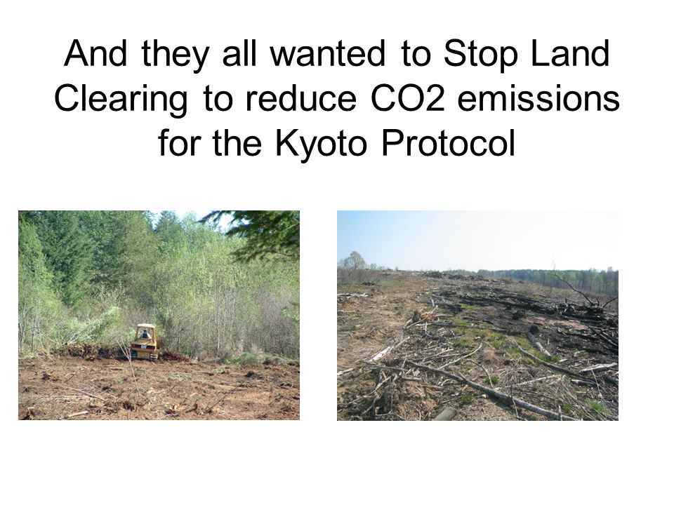 And they all wanted to Stop Land Clearing to reduce CO2 emissions for the Kyoto Protocol