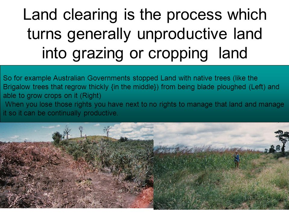 Land clearing is the process which turns generally unproductive land into grazing or cropping land So for example Australian Governments stopped Land with native trees (like the Brigalow trees that regrow thickly {in the middle}) from being blade ploughed (Left) and able to grow crops on it (Right) When you lose those rights you have next to no rights to manage that land and manage it so it can be continually productive.