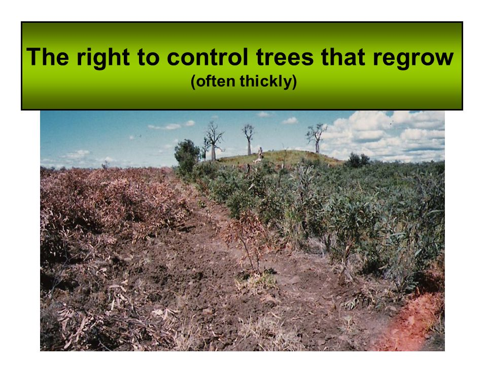 The right to control trees that regrow (often thickly)