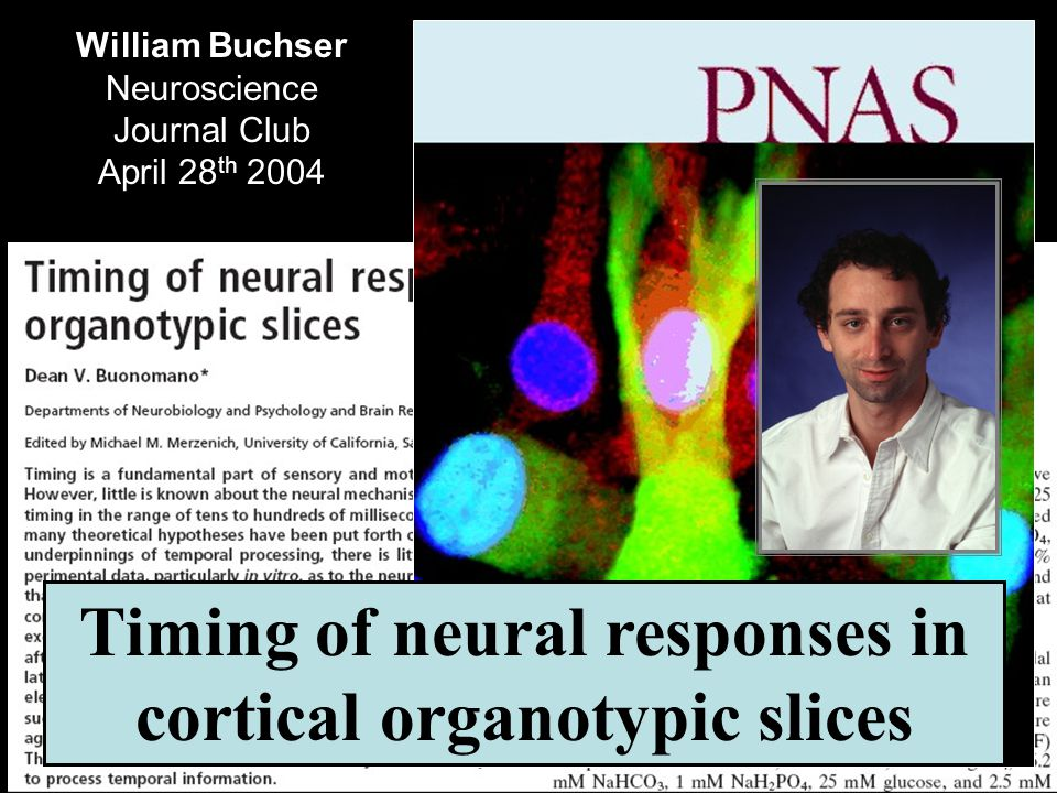 William Buchser Neuroscience Journal Club April 28 th 2004 Timing of neural responses in cortical organotypic slices