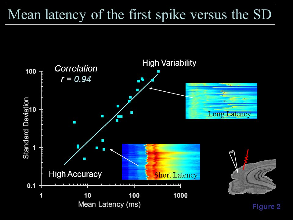 Mean latency of the first spike versus the SD Correlation r = 0.94 Figure 2 High Accuracy High Variability Short Latency Long Latency