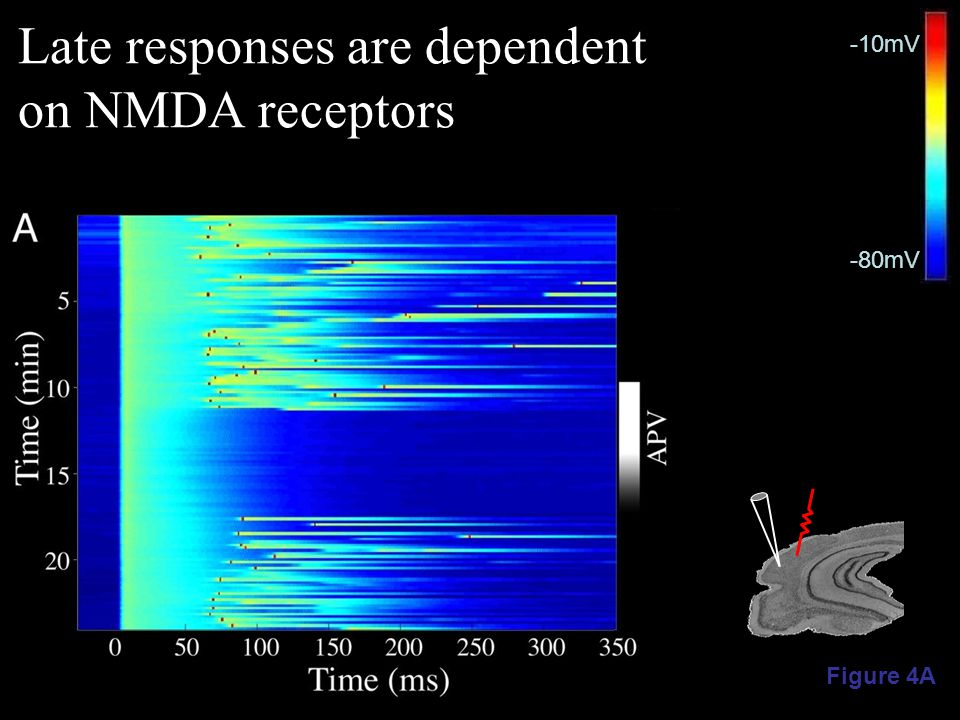 Figure 4A -80mV -10mV Late responses are dependent on NMDA receptors