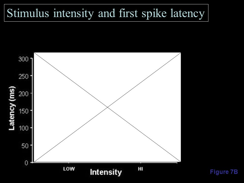 Figure 7B Stimulus intensity and first spike latency